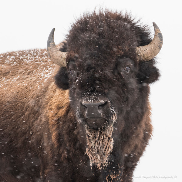 The Bearded Bison_GM1A9191.jpg