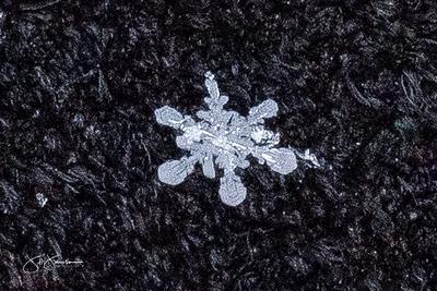 snowflakes-1466.jpg