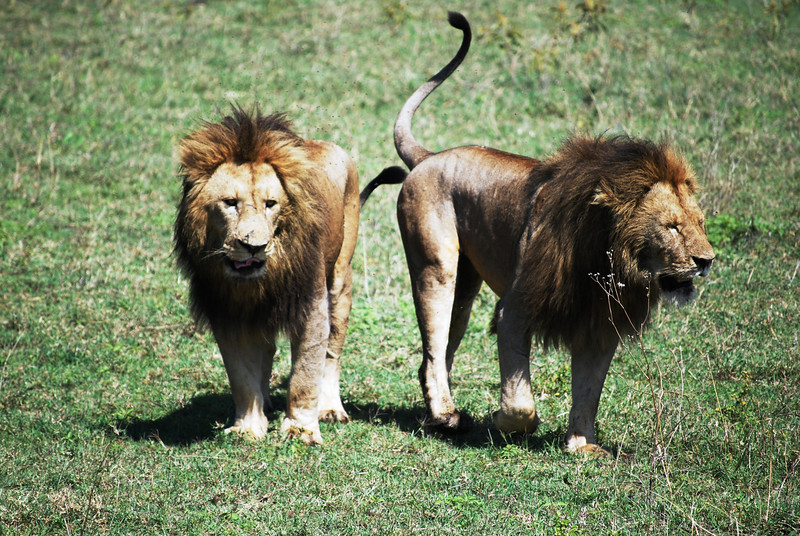 Ngorongoro (145).JPG