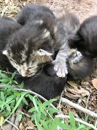 Farm kitties