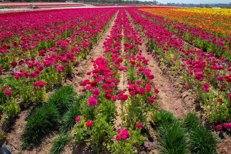 Spring Flowers A-139.jpg