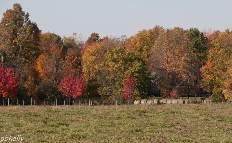 10-29.  Maples and color at my neighbor's farm.