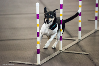 Dinky Dogs TDAA Trials - May 2018