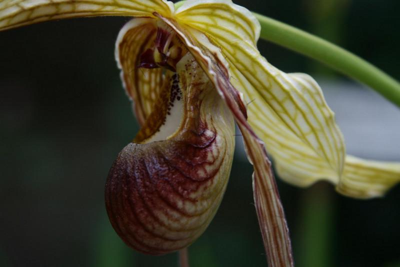 orchids 09 065.jpg