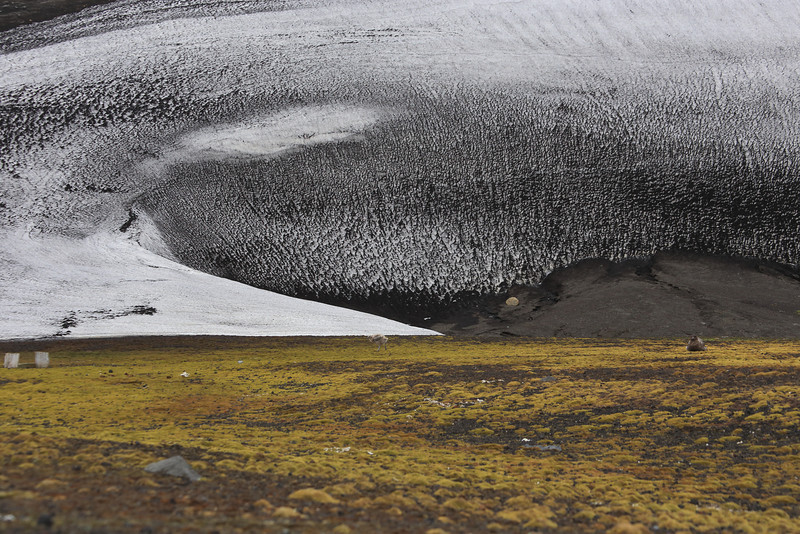 Deception Island, Whalers Bay, always windy!. It's hard to see but there is a Skua and chick on the ground, volcanic dust covers the snow.