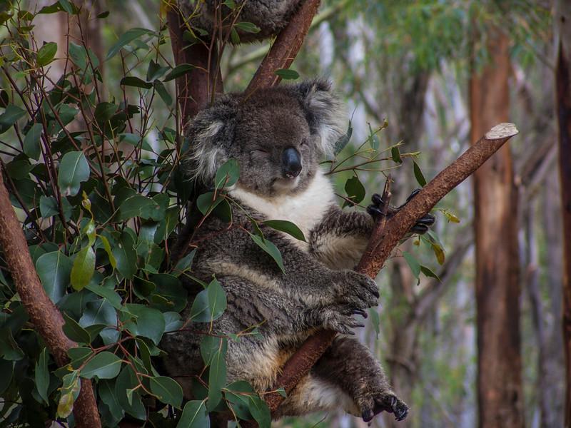 Australia-01892.jpg