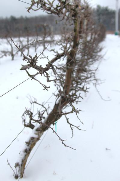 Easy Pickins Winter 013-1676783831-O.jpg