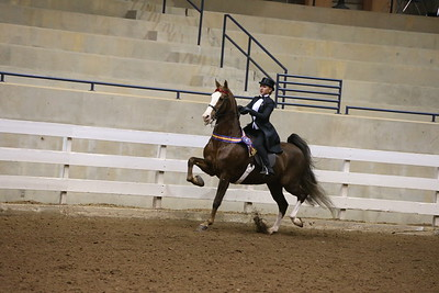 93. 3 Gaited Stake Open