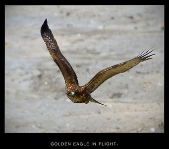 Back Bay Birds of Prey