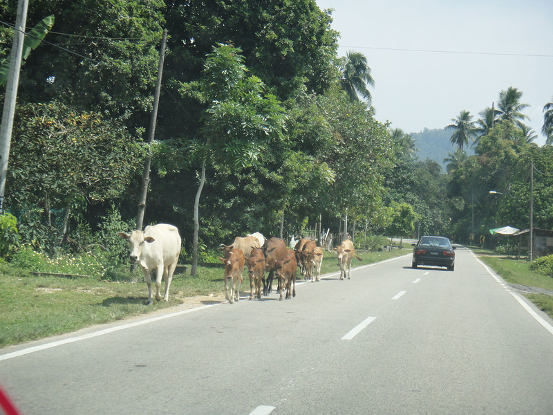 along the road to Kota Bahru (3).JPG