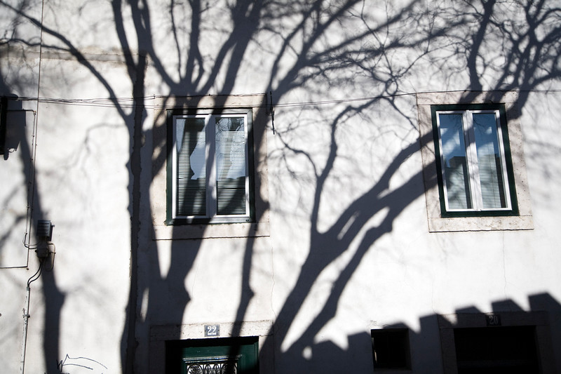 The shadow of bare branches on a whitewashed facade, Alfama, Lisbon