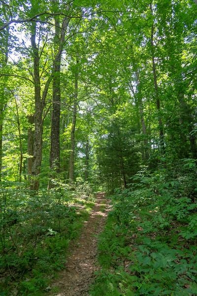 Barnett Branch Trail -- 3,560'