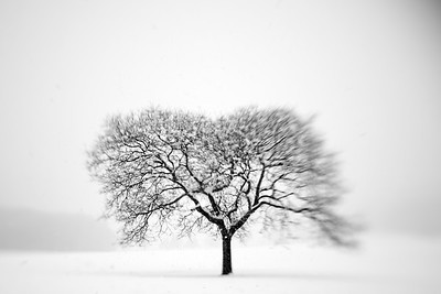 Snow Series---Valley Forge Park