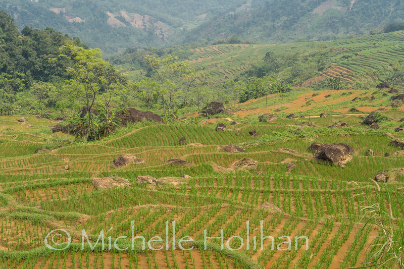 Newly planted rice terraces at Pu Luong Nature Reserve, Vietnam