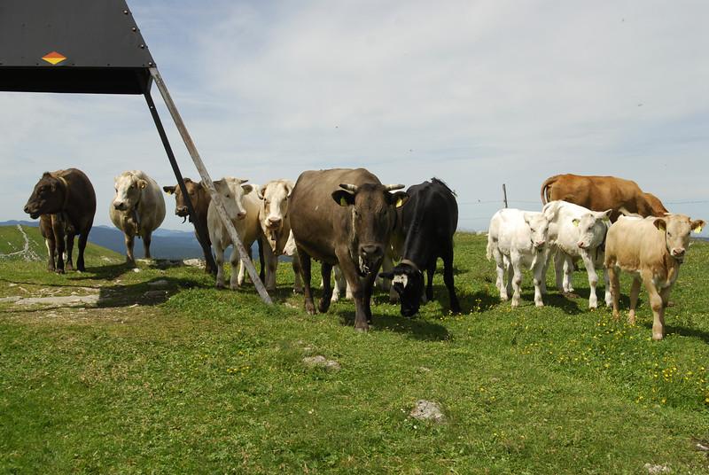 070626 7304 Switzerland - Geneva - Downtown Hiking Nyon David _E _L ~E ~L.JPG