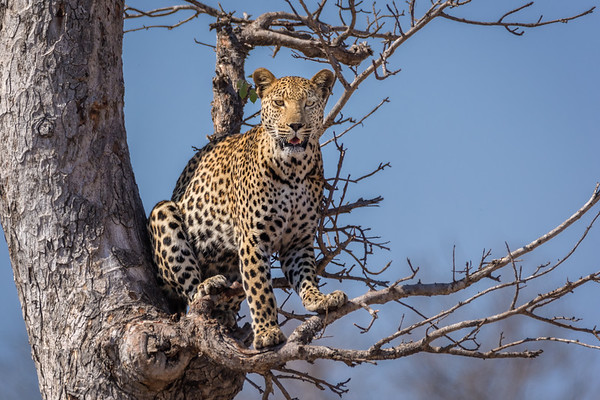 Kruger National Park - Third Trip