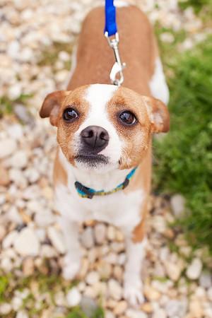 QAC Adoptable Pets - April 2013