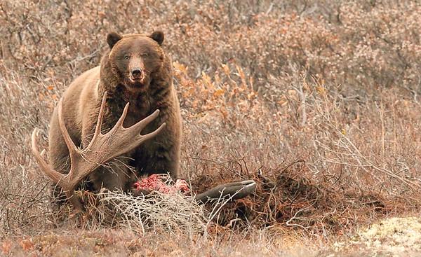Alaska Randy Pics