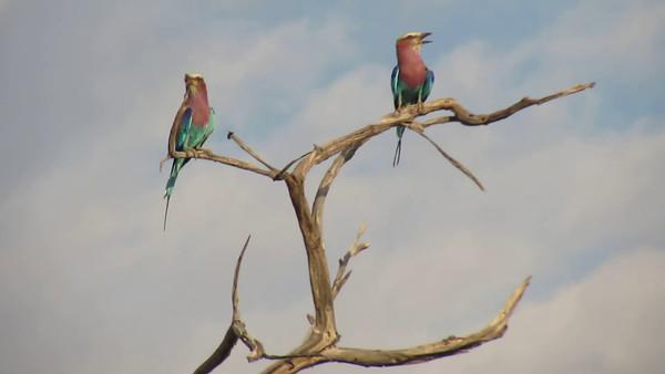 Botswana 2013 Videos