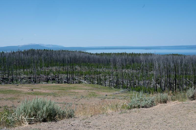 Yellowstone-20200804-8450.jpg