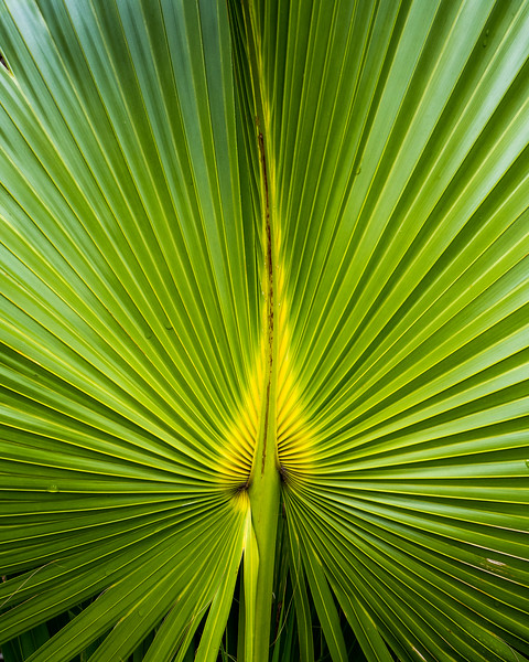 Palm Fronds Vertical