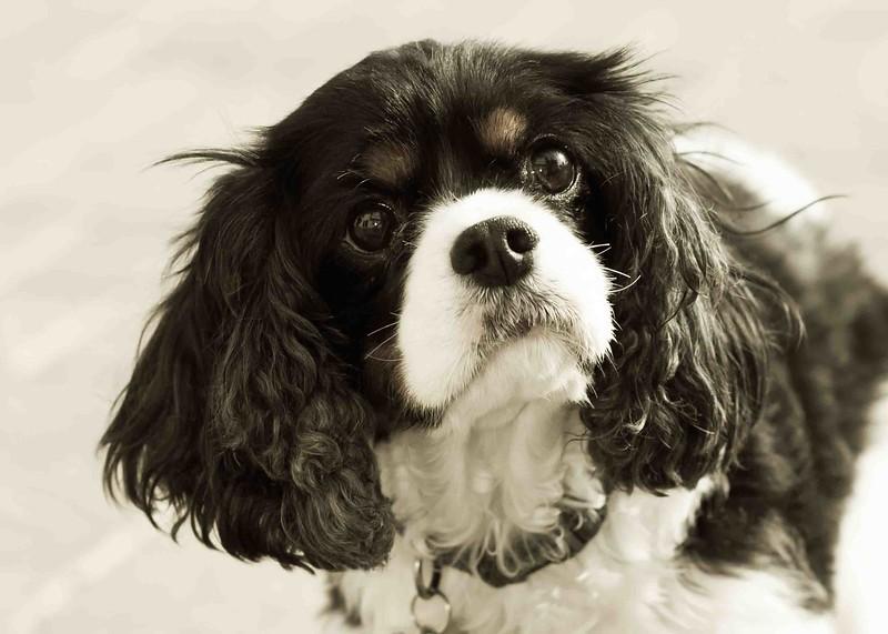 Clifton_Dogs_0056a.jpg