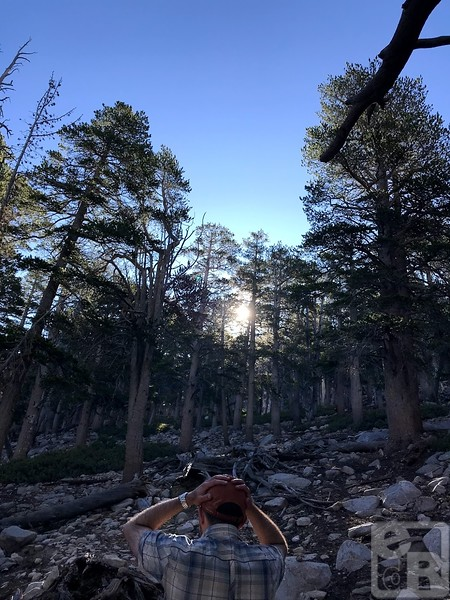 San Gorgonio Backpacking August 2019