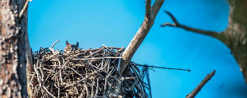 Caladesi Island Nature Trail Bird Watching
