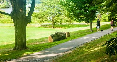 Arbor-cide July 2015 to present