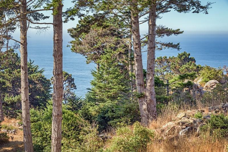 Ocean & Wildlife Views from Deck