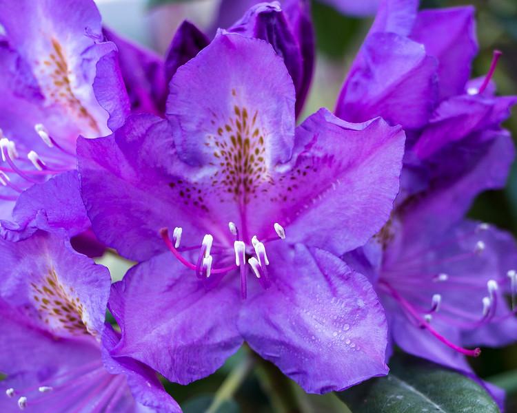 160520_02_6321_Flowers-1p1.jpg