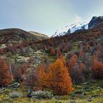 Autumn / Fall in Parque Nacional Torres del Paine, Chile