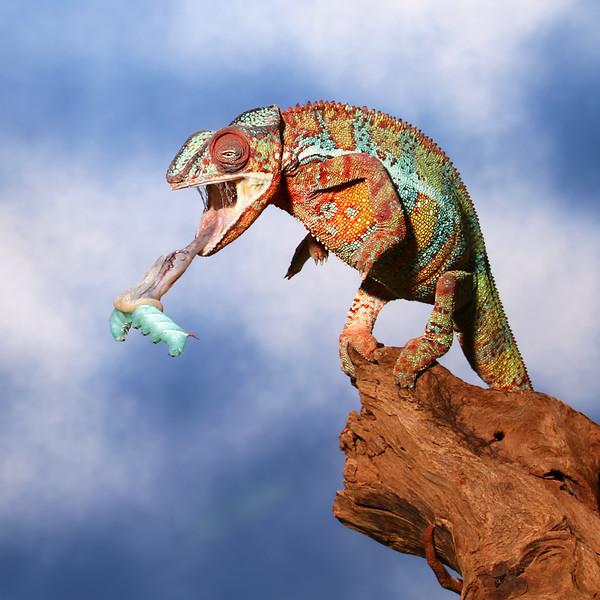 Lizard's Lunch.jpg