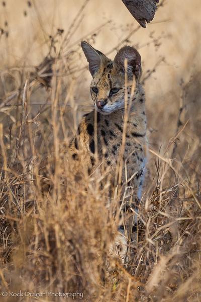 South_Serengeti-29.jpg