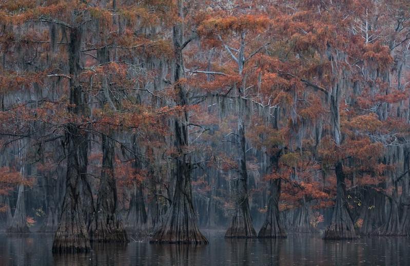 Cypress_Swamps_1117_PSokol-806-Edit.jpg