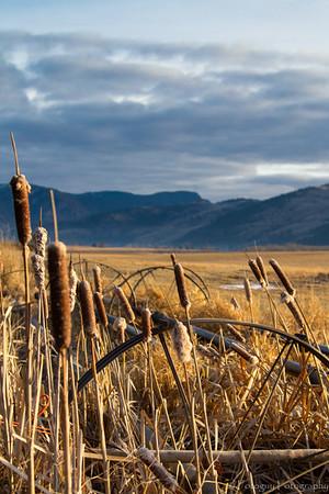 Fields of Merritt