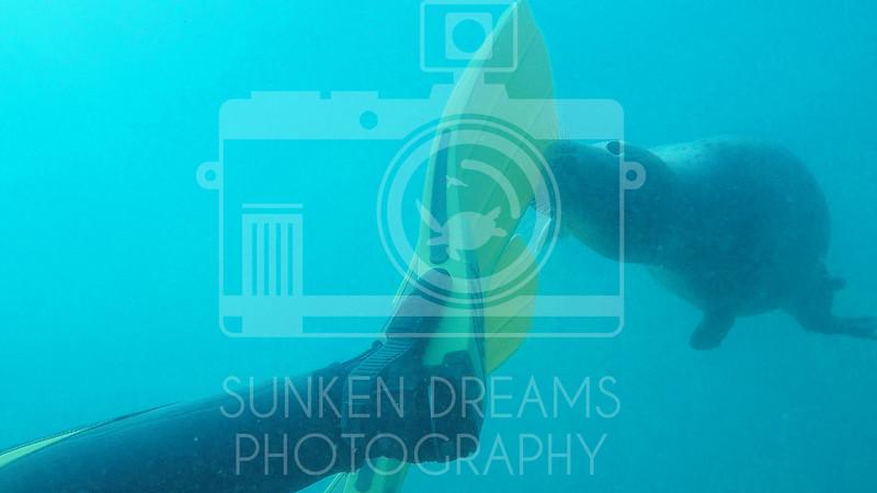 Lundy Island Edit.Still097.jpg
