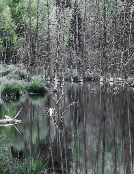 Beaver Pond Reflection