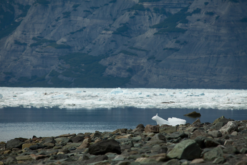 Alaska Icy Bay-4082.jpg