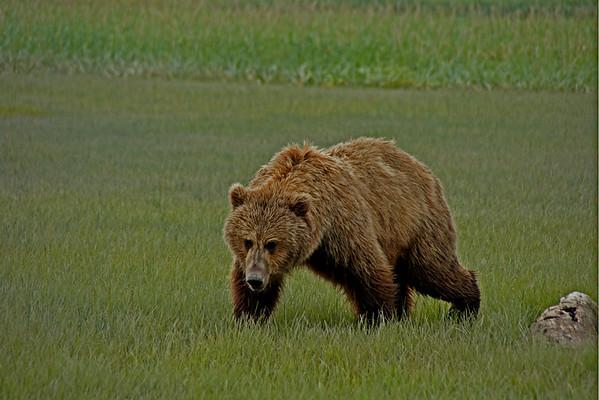 Katmai National Park Alaska