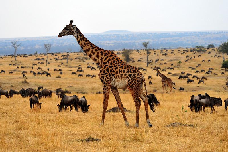 Africa 2010-088.JPG