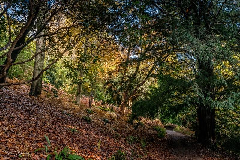 Wakehurst_Autumn-6100.jpg