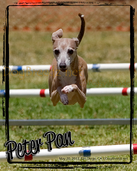 PDT Jumpers Open Round 3 - 12 inch