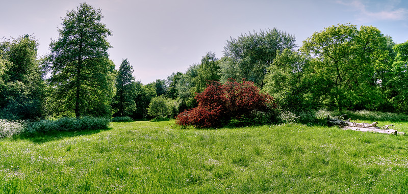 The Glade - Cannon Hill Common