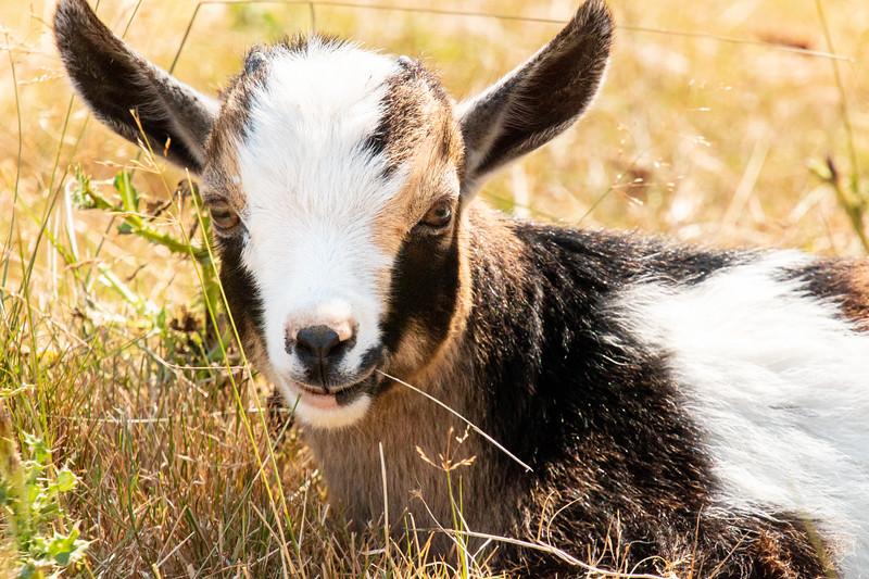 Leaping Lamb Farm-8170.jpg