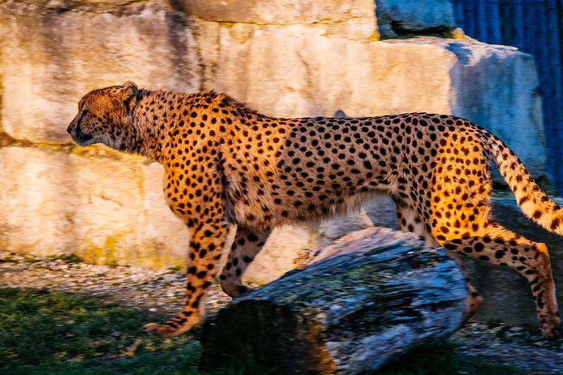 Tonis Zoo-0351.jpg