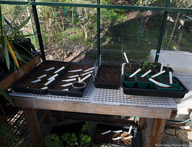 Plant Sale-May-2016