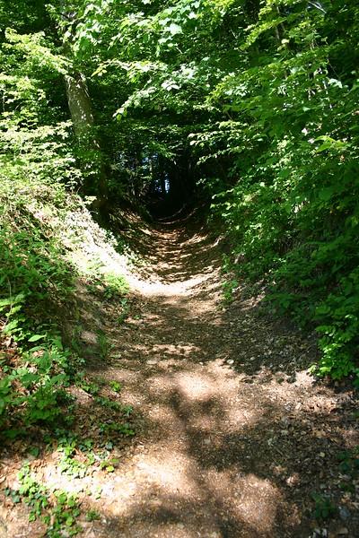 Immer leicht ansteigend ist hier das Enden des Waldes zu erkennen.