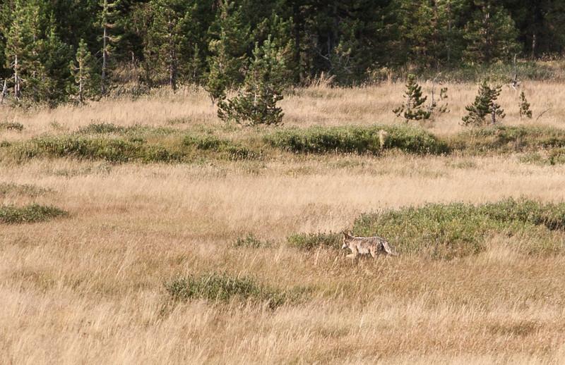 Yellowstone-9052.jpg