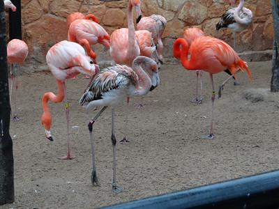 San Antonio Zoo 012613